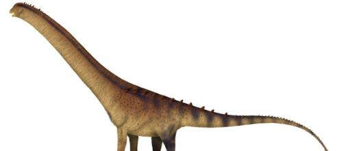 Un nouveau dinosaure aux dimensions gigantesques vient d'être découvert. ©Wikimedia Commons