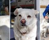 Les images de ce chien qui a attendu son maître hospitalisé ont ému la toile - ©Twitter