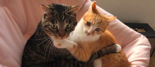 Ces deux chats font le buzz sur les réseaux sociaux - © capture Marleymalin Instagram