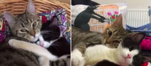L'amitié de deux chats fait le buzz sur les réseaux sociaux - ©capture d'écran vidéo YouTube