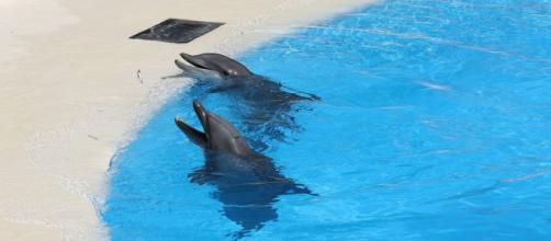 Le parc Astérix dans la tourmente avec ses dauphins - Photo Pixabay