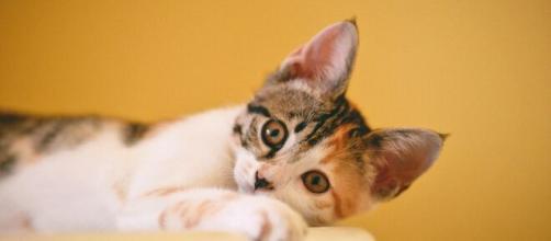Covid-19 : Des scientifiques pensent que la vaccination des animaux puisse être nécessaire. ©Pexels