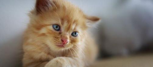 Il faudra désormais obtenir un certificat obligatoire avant de penser adopter un animal de compagnie - ©Pixabay