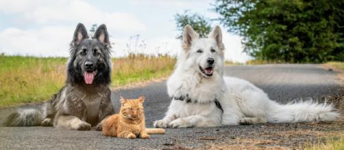 Un chat devient ami avec des chiens après avoir été sauvé par un couple - photo https://www.reddit.com/user/Doudouisawesome/posts/