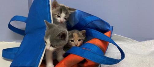 des chatons ont été sauvés de justesse - © post facebook page BC SPCA (BCSPCA)