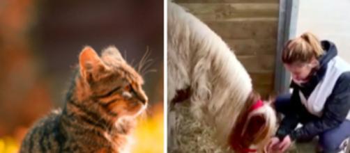 Un chat, un chien et un poney ont été sauvés de justesse - © pexel et capture d'écran Vidéo