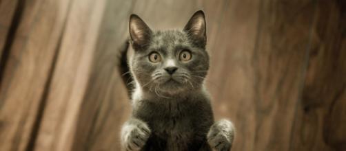 Vers une sanction très élevé si votre chat n'est pas identifié - © pexel