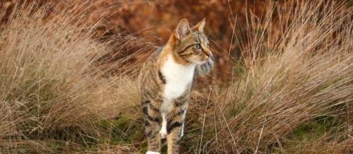 Les disparitions de nombreux chats inquiètent les habitants de Toulouse et sa région - Photo Pexels