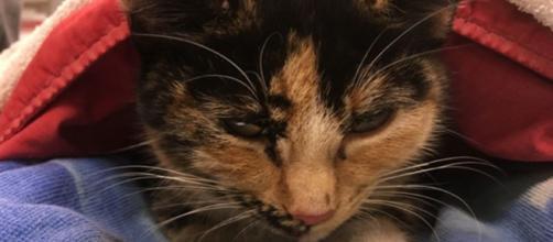 Un chat sauvé de justesse - ©capture d'écran photo facebook page BC SPCA (BCSPCA)