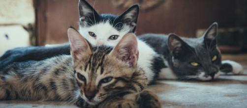 Des dizaines de chats se sont retrouvés seuls - Photo Pexel