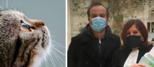 Justice pour Cacahuète chatte morte et abandonnée par sa propriétaire - Photo Pexel et facebook michelle.boucher.92