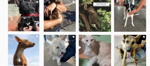 Las redes sociales se pueblan de imágenes de mascotas perdidas en La Palma (Instagram benawara_2018)