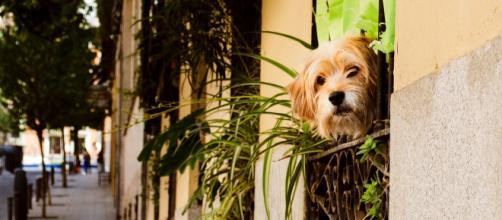 La futura ley busca el cuidado responsable de las personas hacia su perro, teniendo en cuenta las necesidades reales. (Unsplash)