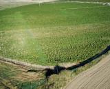 Las plantas incautadas por la Guardia Civil forman parte del cultivo más grande de cannabis en toda Europa (Guardia Civil)