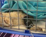 El gato rescatado por el militar de la UME ya se encuentra sano y salvo en recuperación (UPA La Palma)