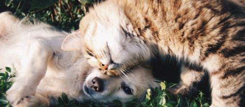 Las mascotas no podrán circular en la vía pública sin supervisión. (Fuente: Pixabay.com)