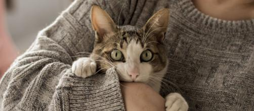 Los padres podrían perder la custodia de sus hijos en caso de maltratar a las mascotas del hogar (Flickr)