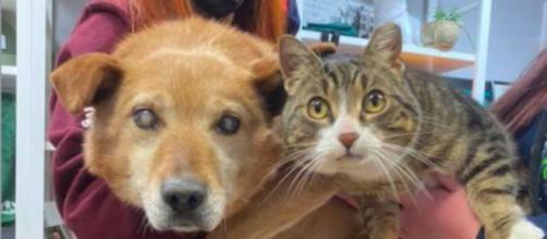 Un chien aveugle et un chat sont inséparables - ©capture d'écran photo Facebook