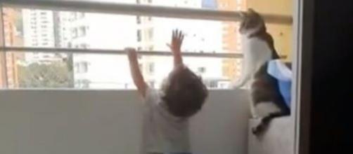 Ce chat va sauver la vie d'un enfant sur un balcon - Photo capture d'écran vidéo