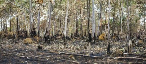 Amazônia: políticas ambientais do governo Jair Bolsonaro sofrem severas críticas no exterior. (Agência Brasil)