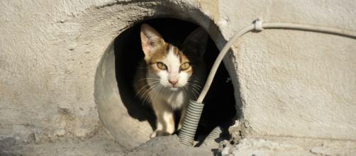 L'attitude des agents de la ville envers des chats errants choque les internautes. ©Pixabay