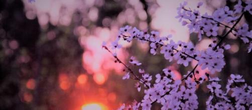 L'oroscopo di marzo, 1^ sestina: emozioni per il Toro, torna l'amore per il Leone.