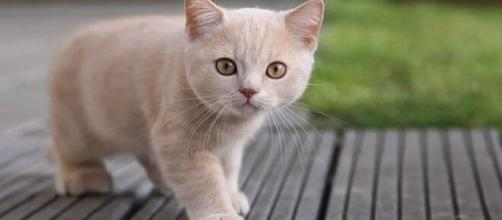 Cuidados essenciais que um gato necessita. (Arquivo Blasting News)