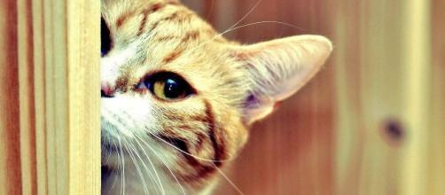 Curiosidades sobre o gato. (Arquivo Blasting News)
