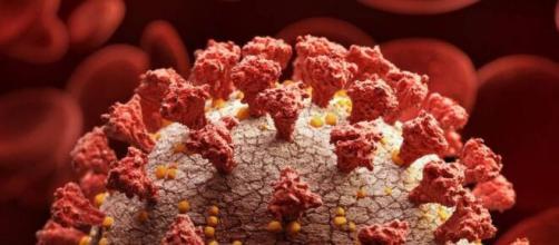 Los genes neandertales influyen en el desarrollo de la enfermedad del coronavirus, según un estudio científico