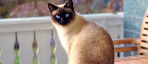 O Dia Mundial do Gato é celebrado no dia 17 de fevereiro. (Arquivo Blasting News)