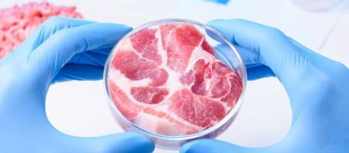 La carne sintetica come possibilità per salvare il pianeta.