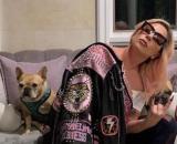 Los perros bulldog de Lady Gaga, por los que tiene un gran afecto. (Foto: Instagram Lady Gaga)