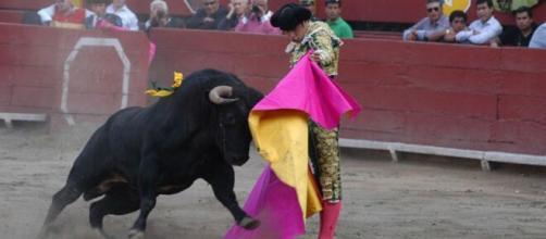 El torero Miguel Angel Perera en plena lidia. (Foto: Flickr)