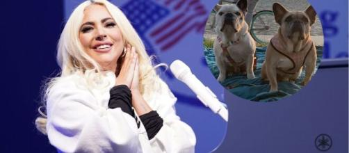 Lady Gaga recupera a los dos perros que le habían robado.
