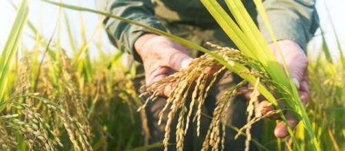 L'agricoltura sostenibile come leva per la salvaguardia della biodiversità.