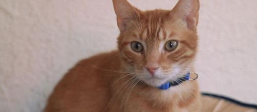 Un gatos da positivo de covid y Corea del Sur ordena pruebas para animales