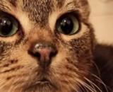 Rio le petit chat qui cherche une famille - Photo capture d'écran Facebook