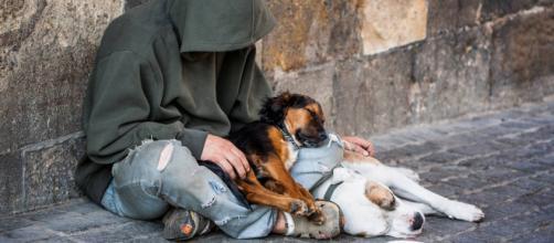 A Torino i senzatetto potranno continuare ad avere un cane
