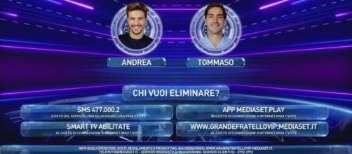 GF Vip: i sondaggi danno Zorzi vincente su Zelletta.