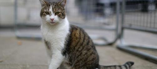 Il primo caso italiano, in un gatto, di contagio con variante inglese di Covid-19.