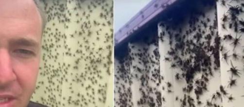 Des milliers d'araignées envahissent l'Australie - Photo captures d'écran vidéo