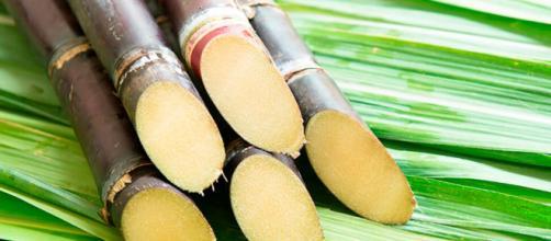 País populoso, Índia autoriza a fabricar etanol com produção excedente da cana-de-açúcar (Arquivo Blasting News)