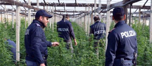 Cannabis: boom di sequestri a Torino.