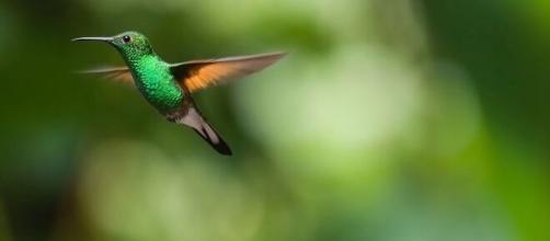 Hummingbird (Image source: Pixabay)