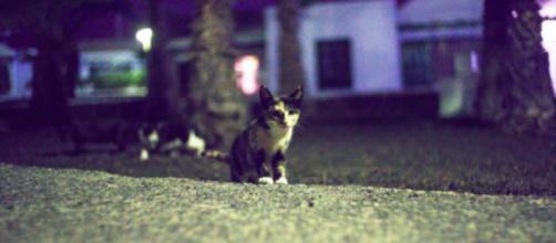 Vers une sanction contre les chauffards en délit de fuite après avoir heurté un chat - Photo Pexel