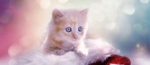 Un chat a succombé à ses blessures après avoir été jetté du 4ème étage - Photo Pixabay