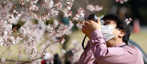 Hanami in giappone, fiori di ciliegio e primavera.