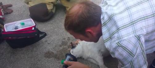 Ces pompiers qui sauvent des animaux - Photo capture d'écran vidéo YouTube
