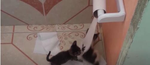 Pourquoi mon chat me suit jusqu'aux toilettes ? - Photo capture d'écran vidéo Youtube