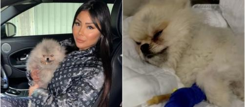 Maeva Ghennam (LMAD) accusée de maltraitance sur son chien Hermès, les internautes sont choqués.